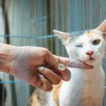 Mačka i veterinar kao jedno od 7 zanimanja budućnosti